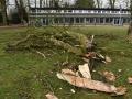 045 Noordernieuws - Paasmarkt Essen 2016 - Boom omgewaaid door storm