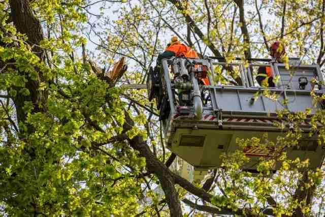 Brandweer verwijdert gevaarlijke tak
