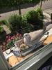 Bijzondere-nestplaats-in-raamkozijn5