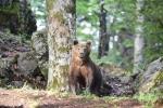 02-ArieJan-Korevaar-Natuur-en-wildlife-fotograaf-Noordernieuws.be-2020-38EA6E9F-2EB1-4FF9-A61A-7607D095AA6E_1_201_a