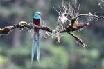 03-ArieJan-Korevaar-Natuur-en-wildlife-fotograaf-Noordernieuws.be-2020-3F7D6065-7369-492A-B838-CBD7C294B466_1_201_a