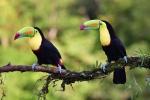 17-ArieJan-Korevaar-Natuur-en-wildlife-fotograaf-Noordernieuws.be-2020-C1D5C15F-07F9-4C78-A937-0FAA79D55C05_1_201_a
