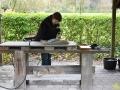 04 De Bijzondere Hobby van Bie Mennes - (c) noordernieuws.be