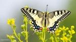 115 Hobby Fotografie - Karel De Blick - Natuurfotograaf - Vogelfotografie - Noordernieuws.be - koninginnenpage