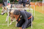 105 Saarlooswolfhond - Lisa van Hoof - Noordernieuws.be - Dogsurvival 1