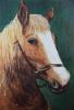 Lisette-Brosens-Hobby-kunstschilderen-Paard-c-Noordernieuws.be-HDB_4835s80