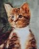 Lisette-Brosens-Hobby-kunstschilderen-Poes-c-Noordernieuws.be-HDB_4838s80