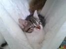 100 De Hobby van Peggy Lambrechts - Gastgezin Kittens - Canina - (c) Noordernieuws.be - 20150620_173731