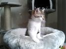 101 De Hobby van Peggy Lambrechts - Gastgezin Kittens - Canina - (c) Noordernieuws.be - 20150620_174033
