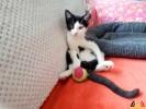 103 De Hobby van Peggy Lambrechts - Gastgezin Kittens - Canina - (c) Noordernieuws.be - 20180823_142750