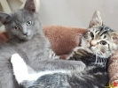 104 De Hobby van Peggy Lambrechts - Gastgezin Kittens - Canina - (c) Noordernieuws.be - 20181002_165131