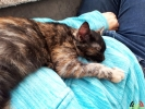 105 De Hobby van Peggy Lambrechts - Gastgezin Kittens - Canina - (c) Noordernieuws.be - 20181003_151410