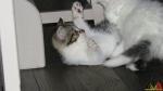 108 De Hobby van Peggy Lambrechts - Gastgezin Kittens - Canina - (c) Noordernieuws.be - IMG_0957