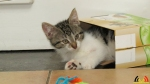 110 De Hobby van Peggy Lambrechts - Gastgezin Kittens - Canina - (c) Noordernieuws.be - IMG_1142