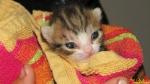 117 De Hobby van Peggy Lambrechts - Gastgezin Kittens - Canina - (c) Noordernieuws.be - IMG_9185