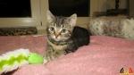 120 De Hobby van Peggy Lambrechts - Gastgezin Kittens - Canina - (c) Noordernieuws.be - IMG_9253