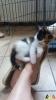 121 De Hobby van Peggy Lambrechts - Gastgezin Kittens - Canina - (c) Noordernieuws.be - IMG-20170707-WA0036