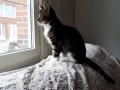 106 De Hobby van Peggy Lambrechts - Gastgezin Kittens - Canina - (c) Noordernieuws.be - 20181004_160634