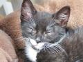 112 De Hobby van Peggy Lambrechts - Gastgezin Kittens - Canina - (c) Noordernieuws.be - IMG_1185