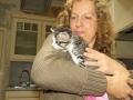 115 De Hobby van Peggy Lambrechts - Gastgezin Kittens - Canina - (c) Noordernieuws.be - IMG_2200