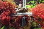 101 Piet Hectors - Zeepaardjes kweken - Zoutwater Aquarium - (c) Noordernieuws.be 2019 - HDB_2861