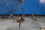 142 Piet Hectors - Zeepaardjes kweken - Zoutwater Aquarium - (c) Noordernieuws.be 2019 - HDB_2907