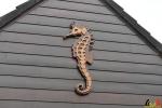 144 Piet Hectors - Zeepaardjes kweken - Zoutwater Aquarium - (c) Noordernieuws.be 2019 - HDB_2910
