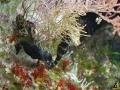 136 Piet Hectors - Zeepaardjes kweken - Zoutwater Aquarium - (c) Noordernieuws.be 2019 - HDB_2896