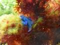 154 Piet Hectors - Zeepaardjes kweken - Zoutwater Aquarium - (c) Noordernieuws.be 2019 - HDB_2920