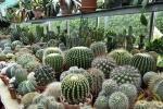 07 Rene Schenk - Cactus - ©Noordernieuws - DSC_1223