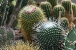 12b Rene Schenk - Cactus - ©Noordernieuws - DSC_1228