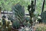 15 Rene Schenk - Cactus - ©Noordernieuws - DSC_1231