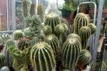 16 Rene Schenk - Cactus - ©Noordernieuws - DSC_1232