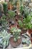 28 Rene Schenk - Cactus - ©Noordernieuws - DSC_1244