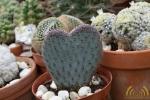 35 Rene Schenk - Cactus - ©Noordernieuws - DSC_1251