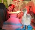 137 Wendy Adriaens - Hobby Struisvogels - Noordernieuws.be - fullsizeoutput_17fe