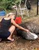139 Wendy Adriaens - Hobby Struisvogels - Noordernieuws.be - fullsizeoutput_193a