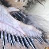 148 Wendy Adriaens - Hobby Struisvogels - Noordernieuws.be - fullsizeoutput_1946