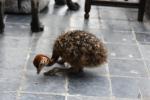 Wendy-Adriaens-Hobby-Dieren-Struisvogels-c-Noordernieuws.be-2021-HDB_4171