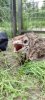 Wendy-Adriaens-Hobby-Dieren-Struisvogels-c-Noordernieuws.be-2021-image00002