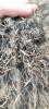 Wendy-Adriaens-Hobby-Dieren-Struisvogels-c-Noordernieuws.be-2021-image00003