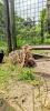 Wendy-Adriaens-Hobby-Dieren-Struisvogels-c-Noordernieuws.be-2021-image00004