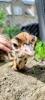 Wendy-Adriaens-Hobby-Dieren-Struisvogels-c-Noordernieuws.be-2021-image00006