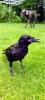 Wendy-Adriaens-Hobby-Dieren-Struisvogels-c-Noordernieuws.be-2021-image00007