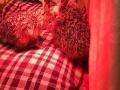 114 Wendy Adriaens - Hobby Struisvogels - Noordernieuws.be - dBQhDUlqQhGpO6mmgqpL0A