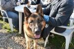 03 Canina - Wandeldag en Rommelmarkt - ©Noordernieuws - DSC_3285