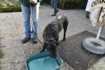 09 Canina - Wandeldag en Rommelmarkt - ©Noordernieuws - DSC_3291