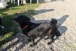 17 Canina - Wandeldag en Rommelmarkt - ©Noordernieuws - DSC_3299