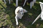18 Canina - Wandeldag en Rommelmarkt - ©Noordernieuws - DSC_3300