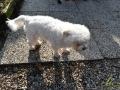 04 Canina - Wandeldag en Rommelmarkt - ©Noordernieuws - DSC_3286